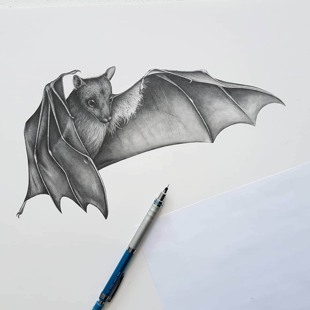 Bat Pencil Drawing