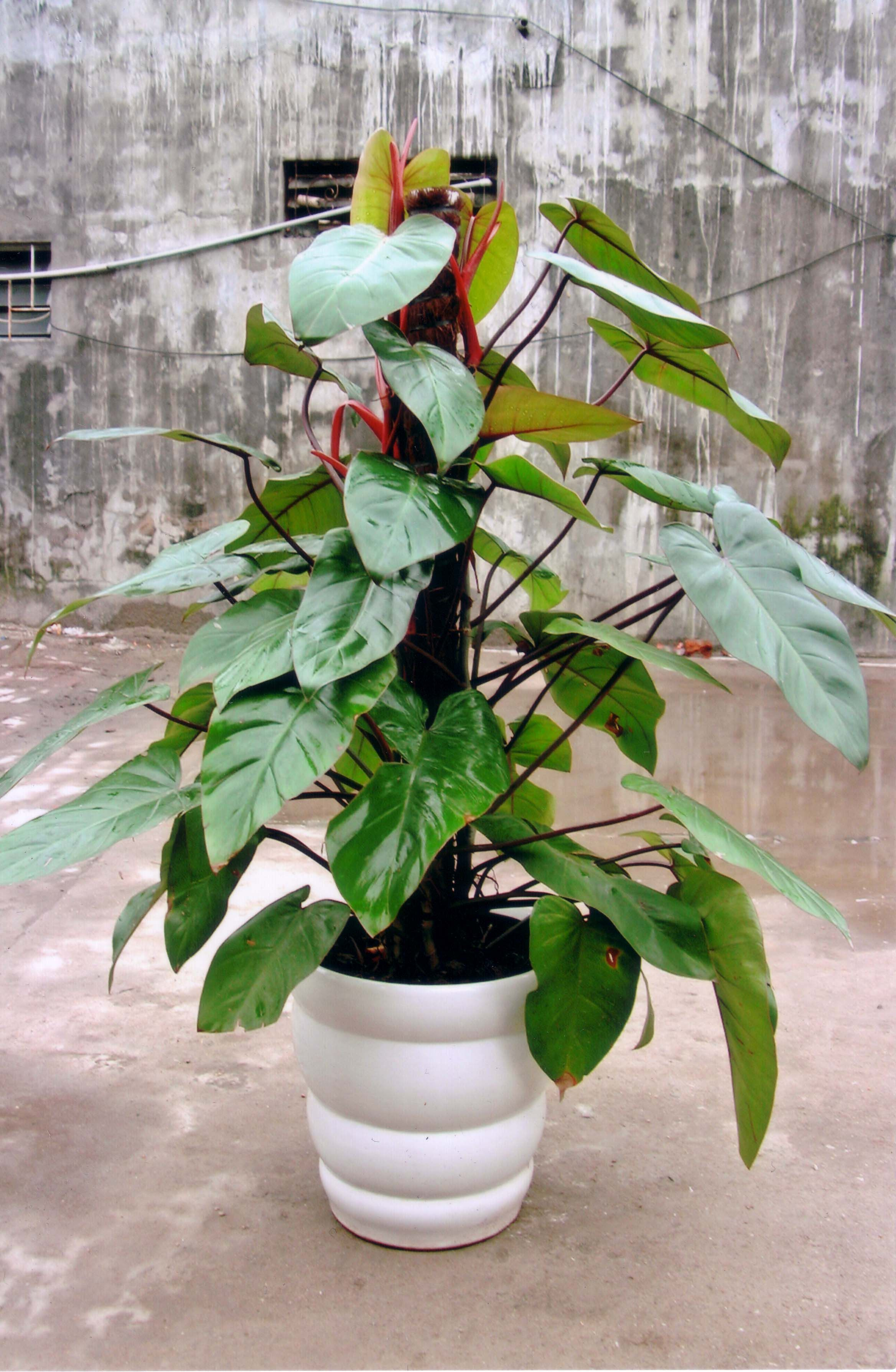 House Plants, Indoor House Plants, Container Plants
