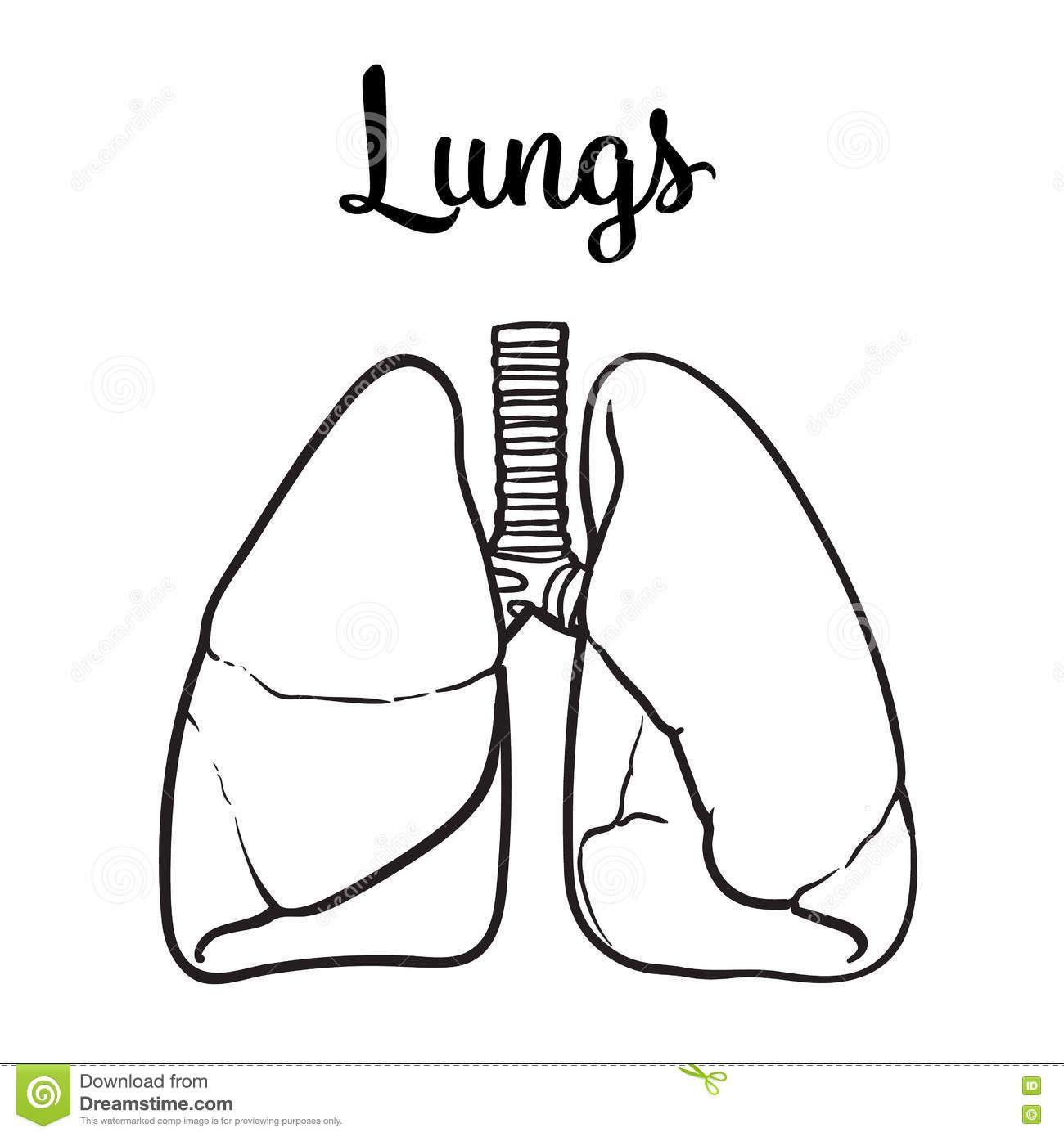 El sistema respiratorio y digestivo para infantil | Dibujar ...