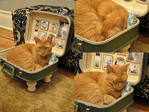 vintage suitcase into kitty bed  -- on my list  to do!!