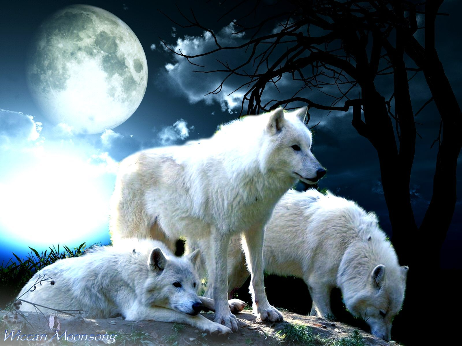 White Wolf Moon Wallpaper