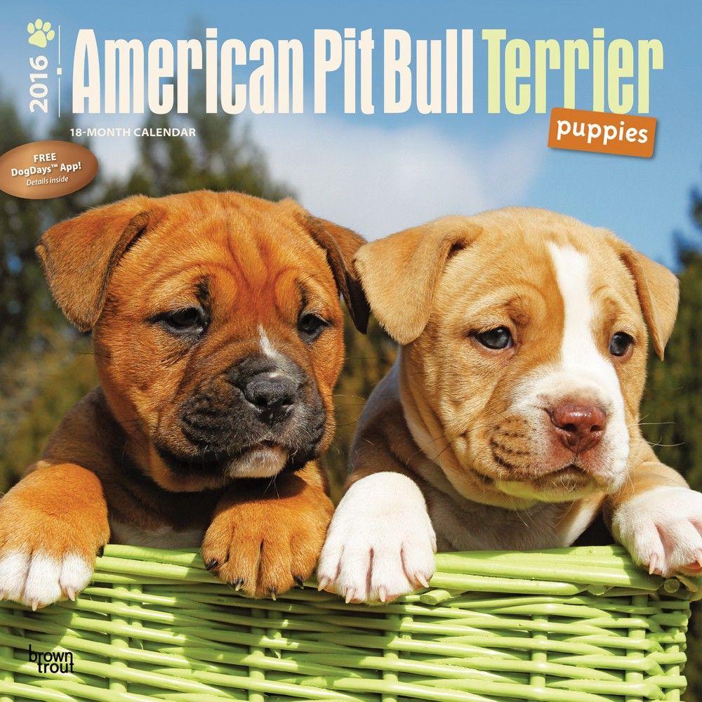 American Pitbull Terrier Puppies Calendar Pitbull Terrier