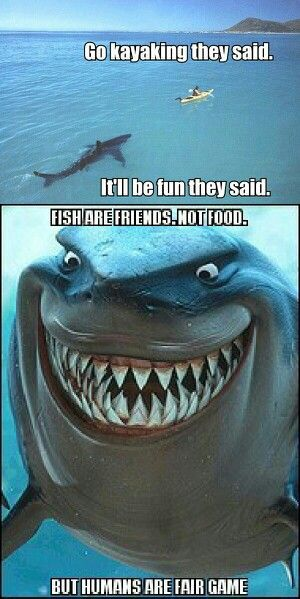 Another Reason I Don T Go In The Ocean Funny Shark Pictures Sharks Funny Funny Video Memes