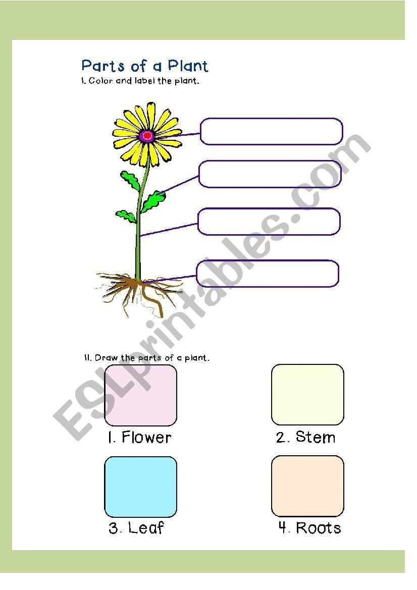 Label A Plant Worksheet Parts Of A Plant Esl Worksheet By Joannagrace2911 Kids Worksheets Printables Plants Worksheets Worksheets Parts of plants worksheets