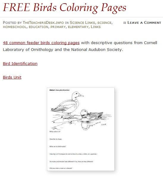 Free Birds Coloring Pages Coloring