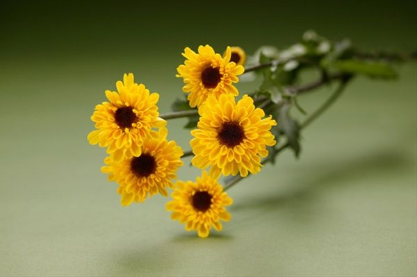 Viking Mum Mini Sunflower Wedding Ideas