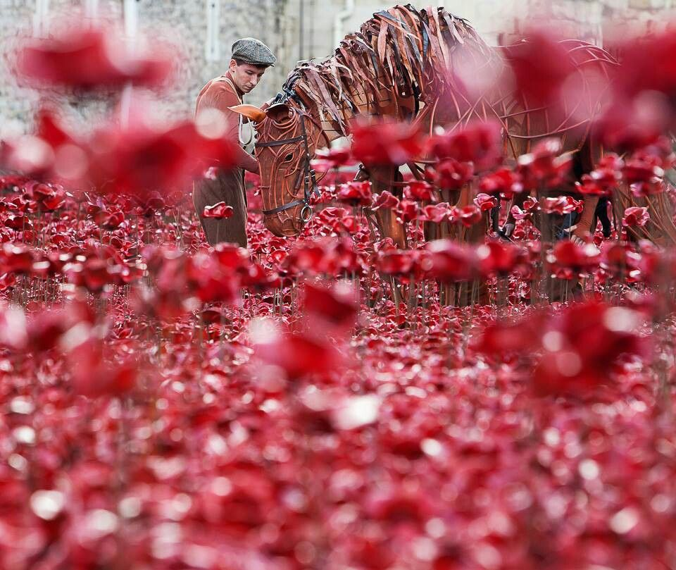 Warhorse Joey at the Tower of London