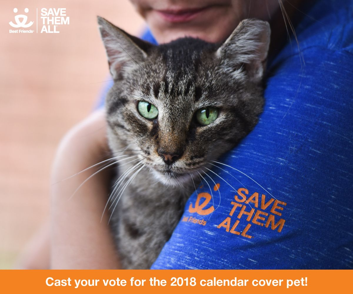 Are You Ready For What May Be The Cutest Decision You Make All Day Help Choose The Best Friends 2018 Calendar Cover Pe Best Friends Animal Society I Love Cats