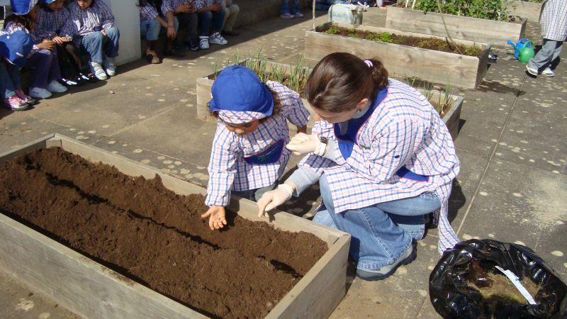 A semear girassóis na nossa horta!