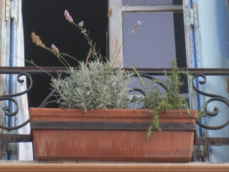Lavanda jardin pinterest lavanda sur de francia y for Jardines de lavanda