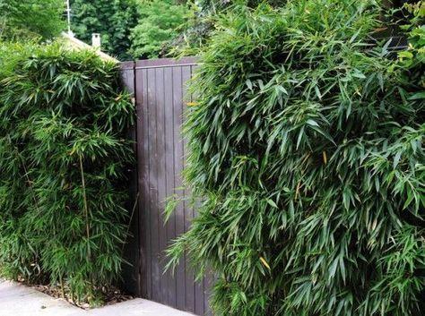 Bambou Jardin  nos idées du0027aménagement