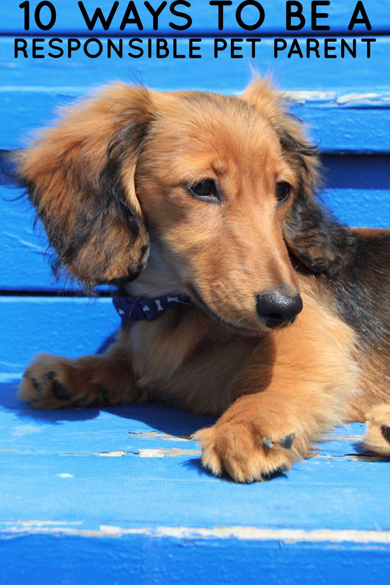 10 Ways To Be A Responsible Pet Parent The shelter pet