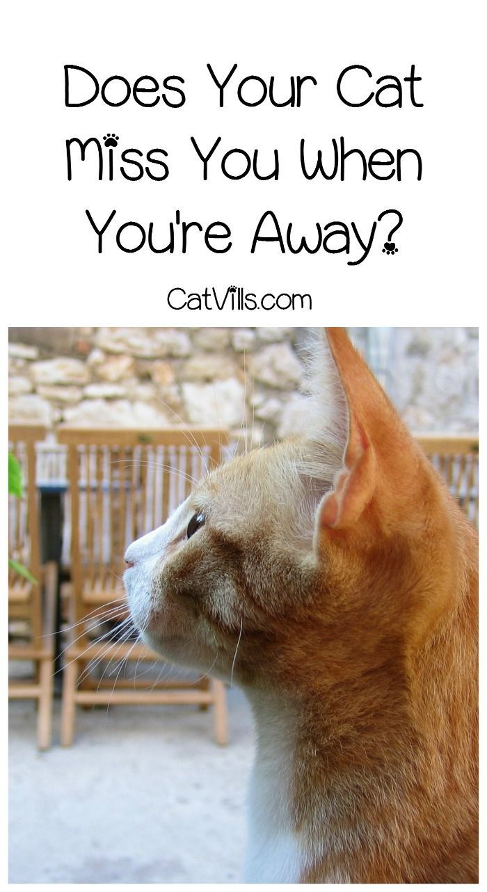 Pin On Cat Advice
