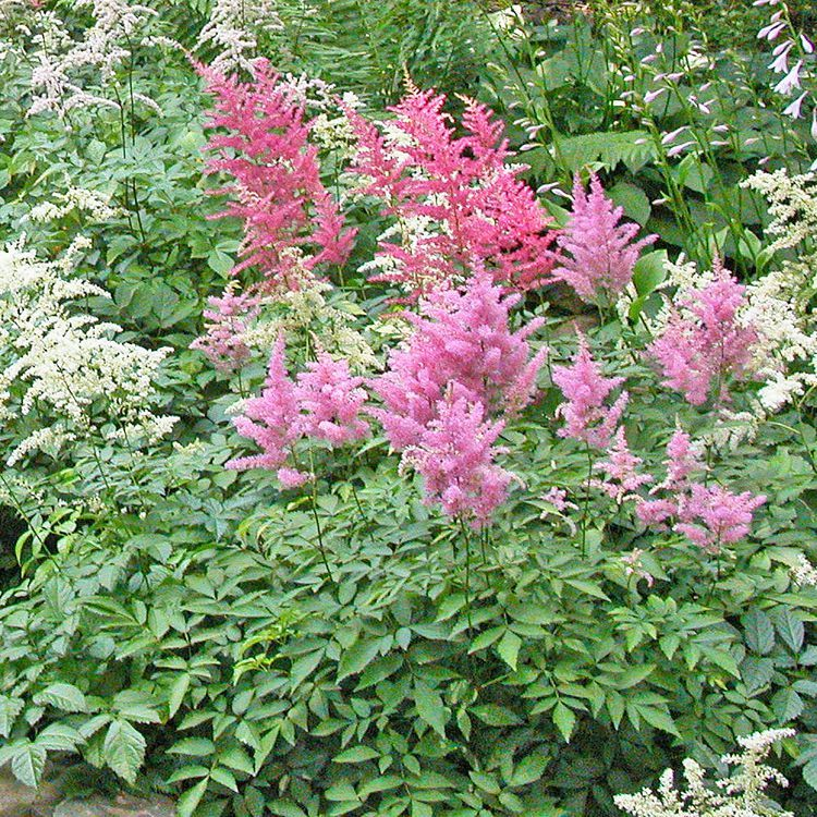 What Are 10 Foolproof Perennial Plants For The Northeast New