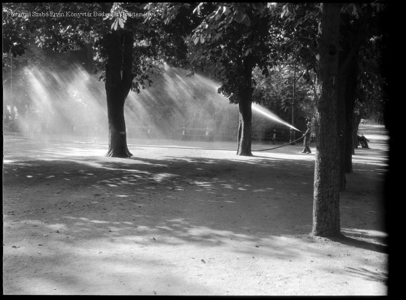 Kinszki Imre (1901-1945) Locsolás egy parkban Budapest1938