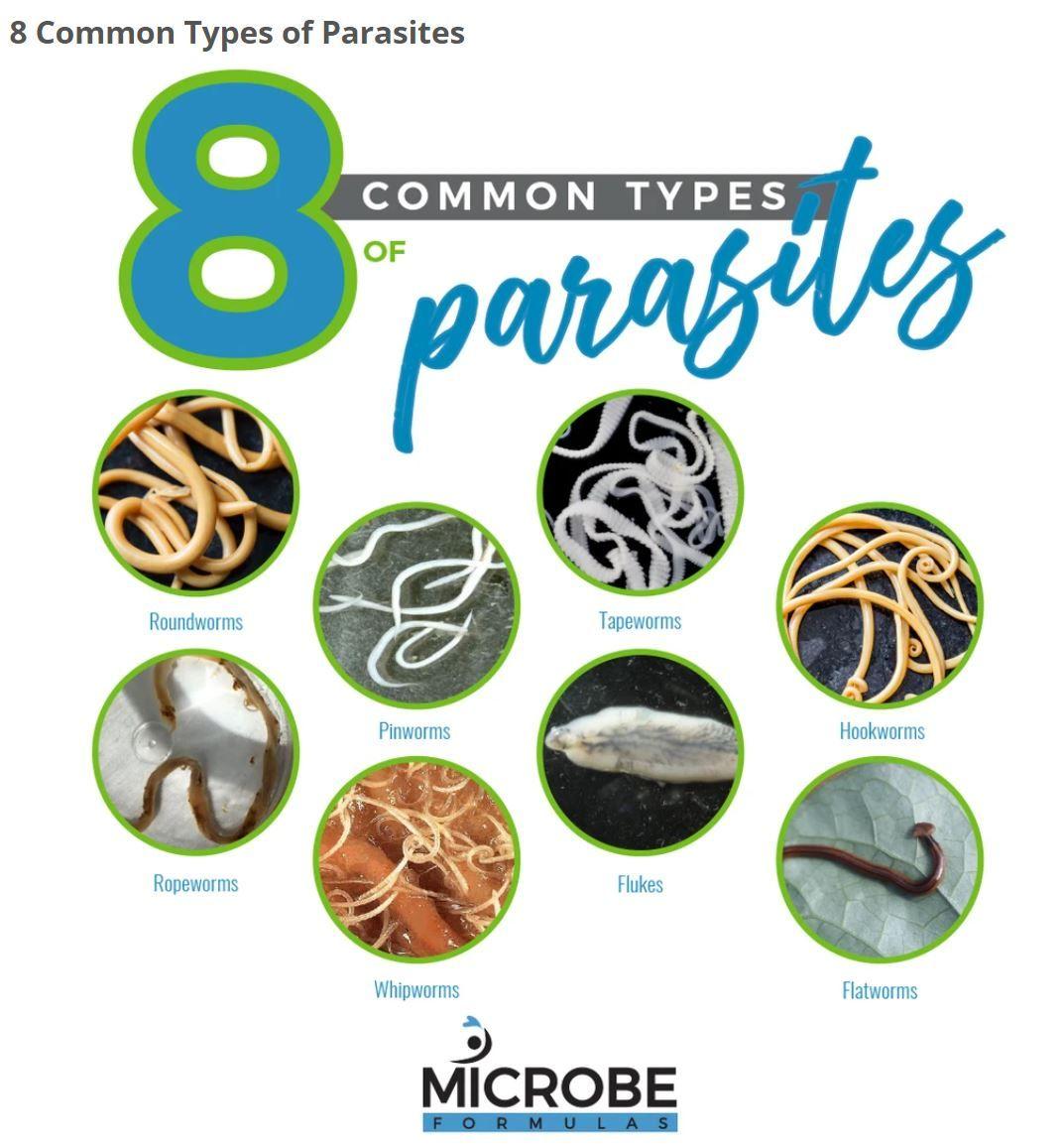Pinworms mi okozza Fórum paraziták és kezelésük