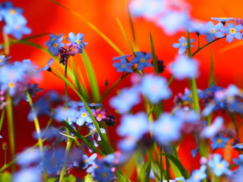 Flowers - abstract Photo by Lena W. -- National Geographic Your Shot