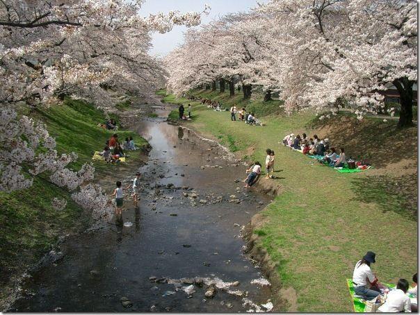Let S Hanami In Tachikawa Japan Japan Travel Nihon Sun Japan Travel Places To Travel Travel