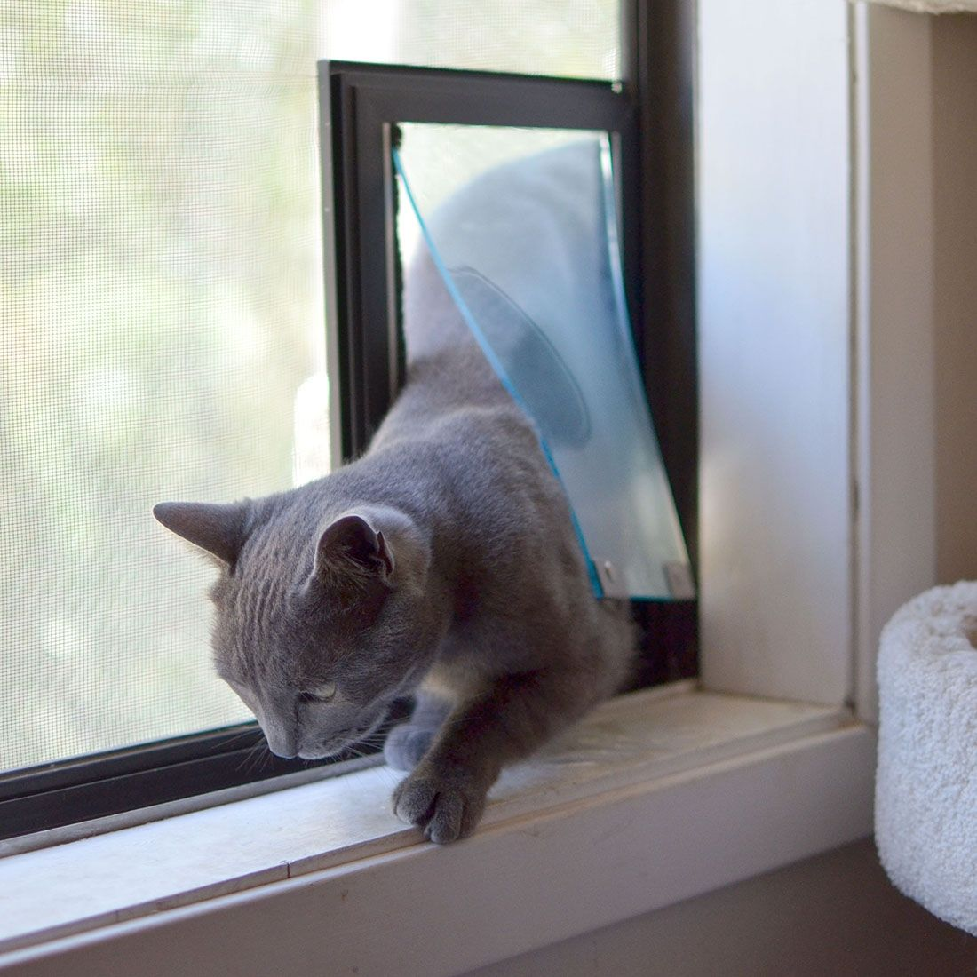 Small Cat Door For Screen With Images Cat Door For Window Cat