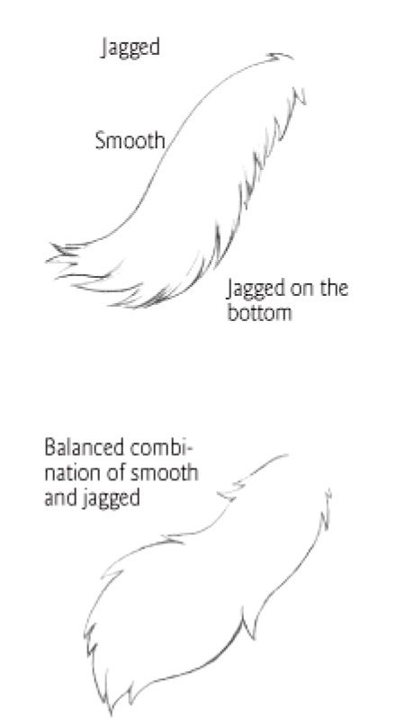 Tail Types 2 Drawing Tips Furry Drawing Wolf Sketch