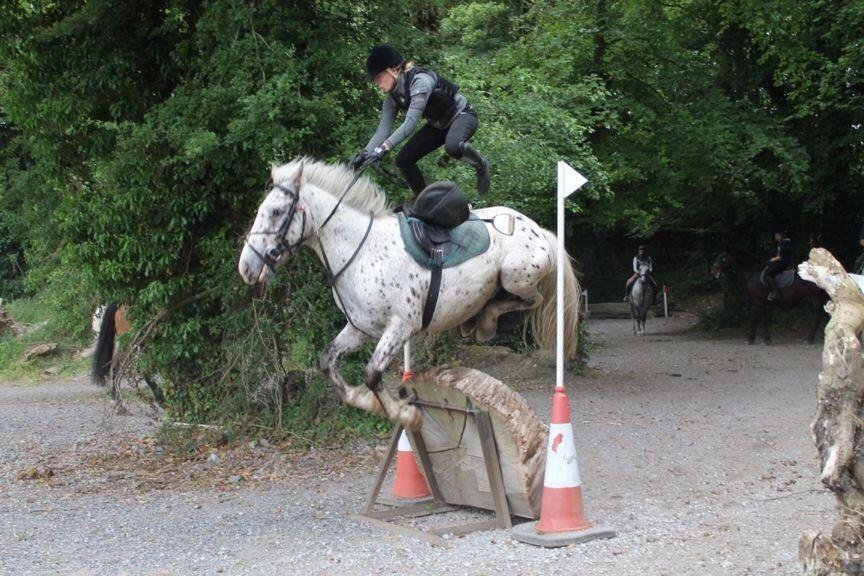 Jumping Flowerhill Equestrian Centre Ireland Tally