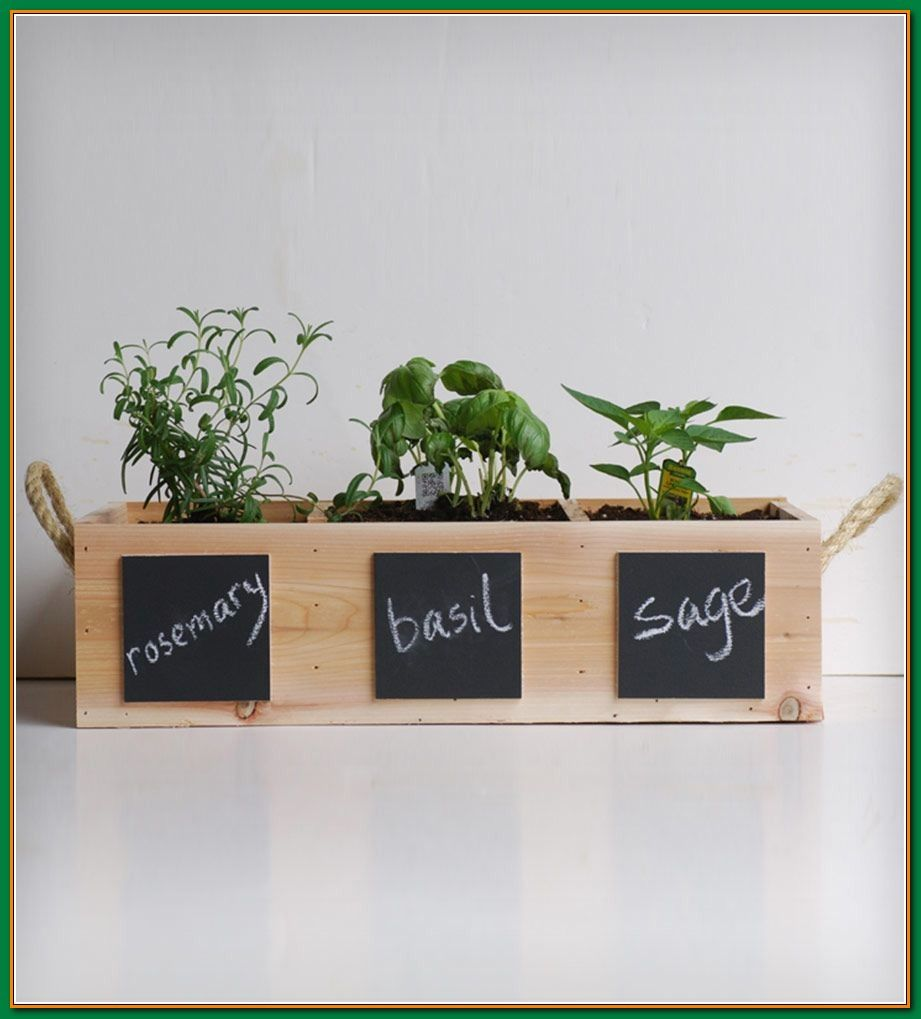 Ideas How To Create A Thriving Organic Garden Herbs Indoors
