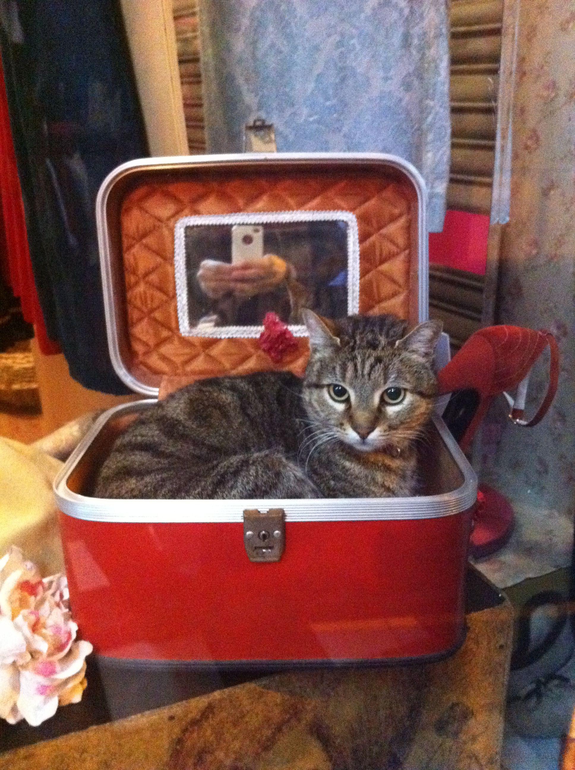 Beauty box cat