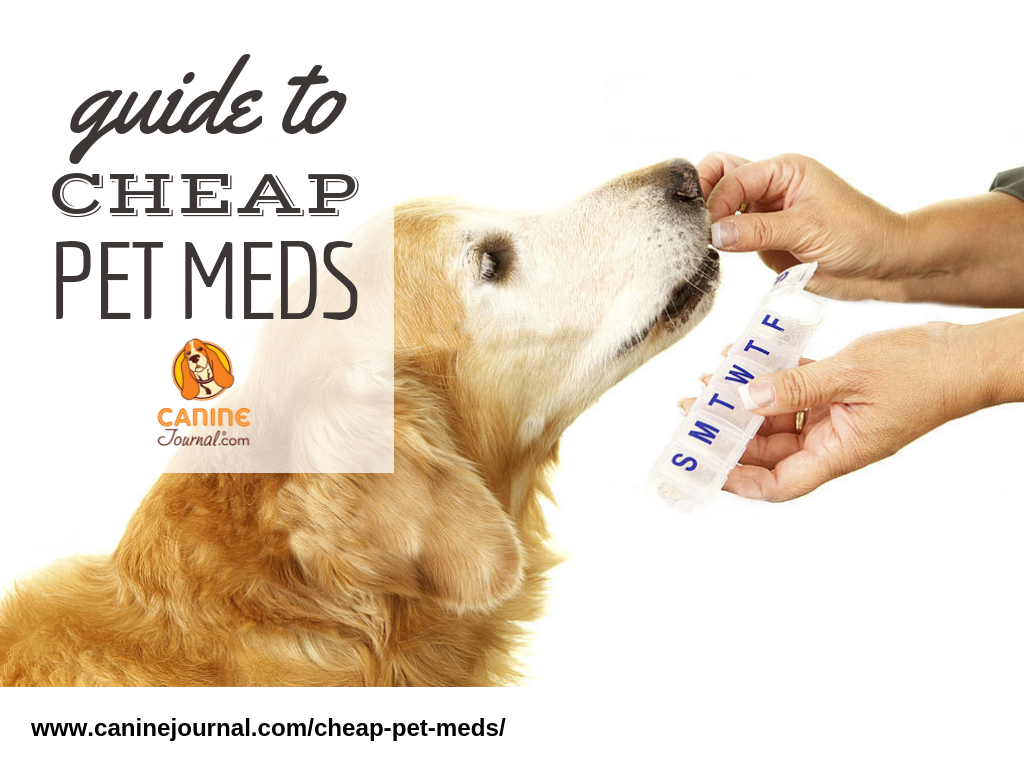 How to Stop Dog Allergies with Powerful Treatments That