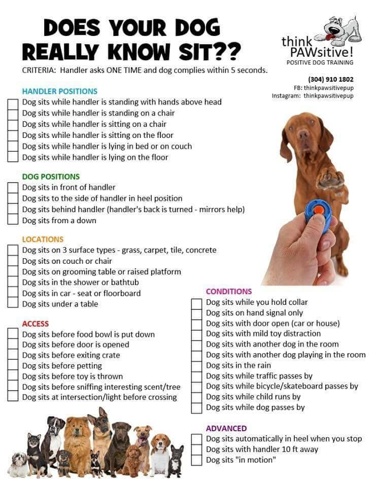 Equinox Psychiatric Service Doodle In Training Dogs On Logs What A Great List Of Ideas F Psychiatric Service Dog Service Dog Training Positive Dog Training