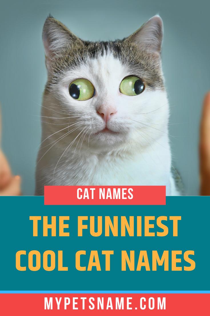 Funny Cool Cat Names In 2020 Funny Cat Names Funny Male Cat Names Cute Cat Names