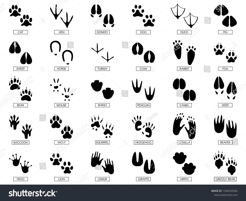 Animals Footprints Animal Feet Silhouette Frog Footprint And Pets Foots Silhouettes Prints Wild African Anim Animal Footprints Animal Tracks African Animals [ 1225 x 1500 Pixel ]