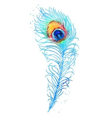 Watercolor peacock feather vector - by jetFoto on VectorStock ...