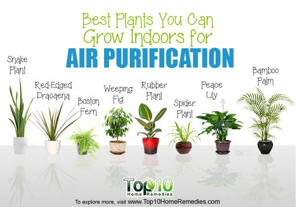 Best Indoor Plants For Air Purification Spider Plant Snake Aloe
