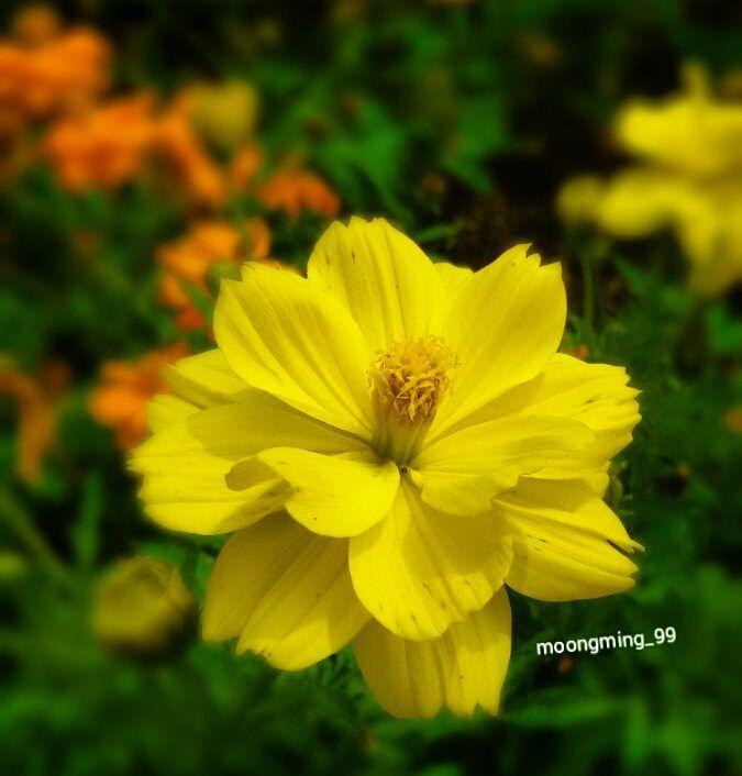 15/03/2016 #flowerstagram#blossoms #flowers#flower_perfection #beautifulflowers by moongming_99