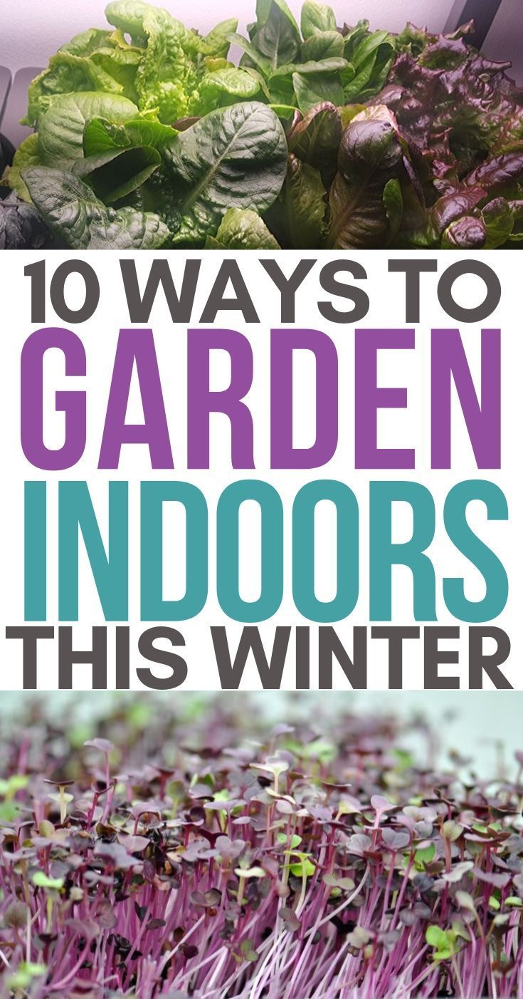 10 Easy Indoor Gardening Ideas #wintergardening