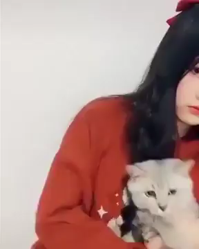 cat's reactions