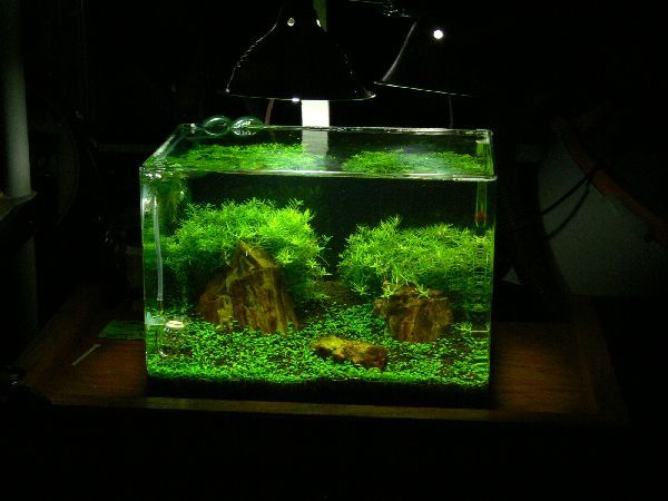 10 gallon Planted Radius Curved Corner Glass Aquarium Planted - deko fur aquarium selber machen