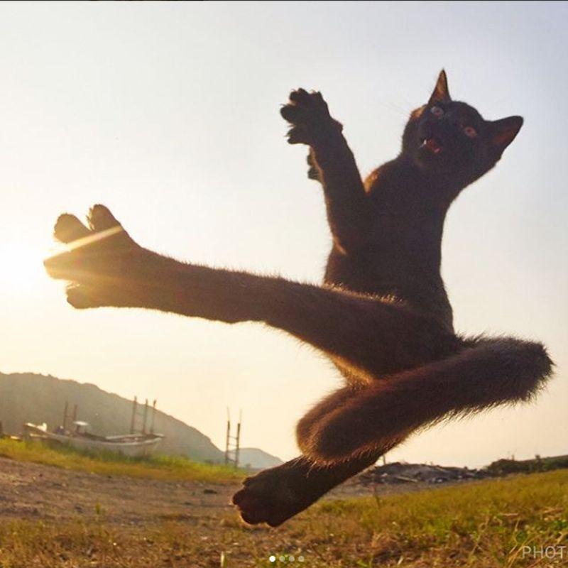 Ninja Cat, Fotografi Kucing Bergaya Ninja Karya Hisakata Hiroyuki