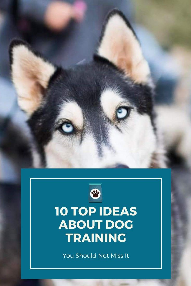 Dog chewing training your dog tips to make your job