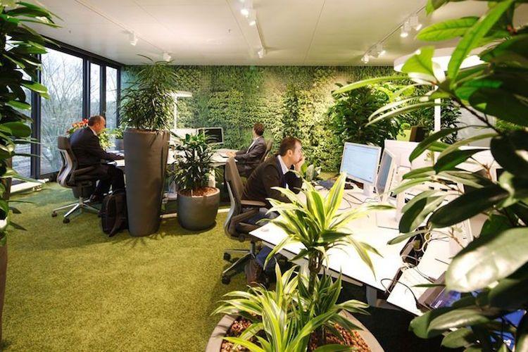Idée déco bureau éco friendly le jardin vertical est la grande