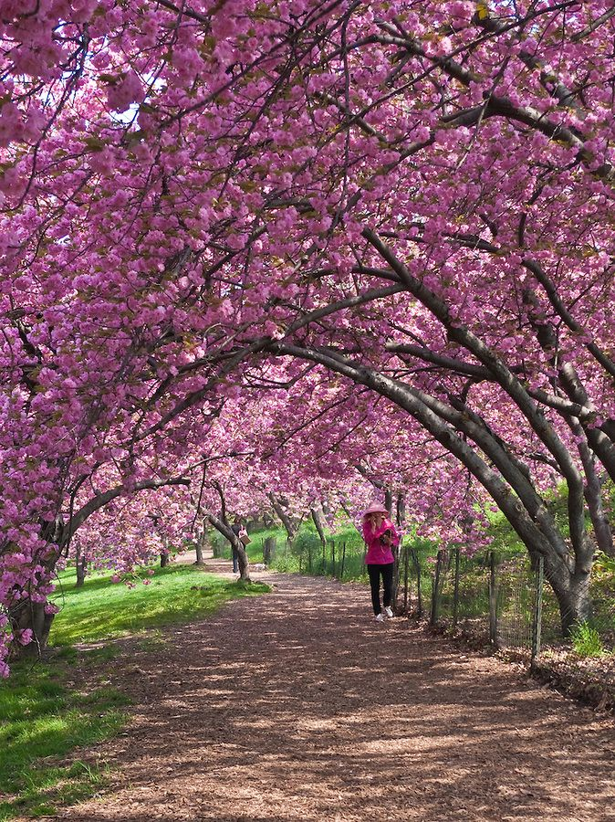 Central Park Spring Cornelis Verwaal Photography Central Park Park Nyc With Kids