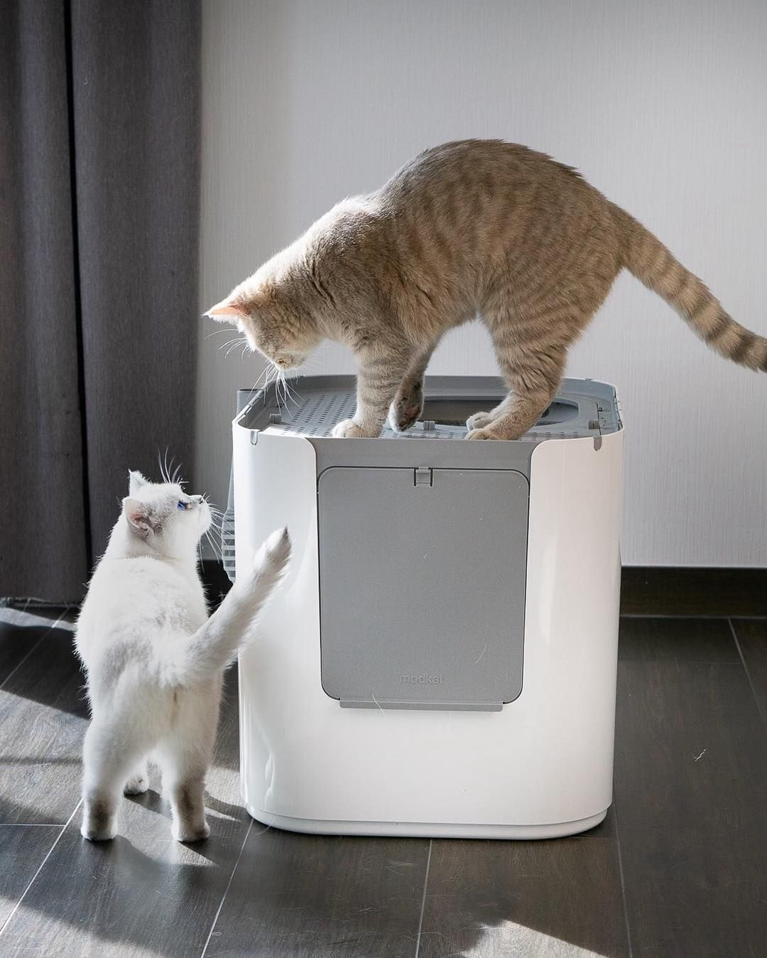 Top 5 Best Cat Litter Boxes For Odor Control Catvills Best Cat