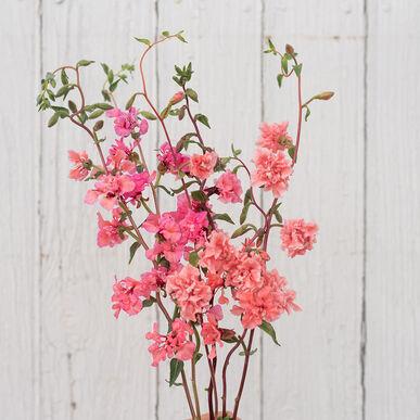 Pin On Farming Flowers
