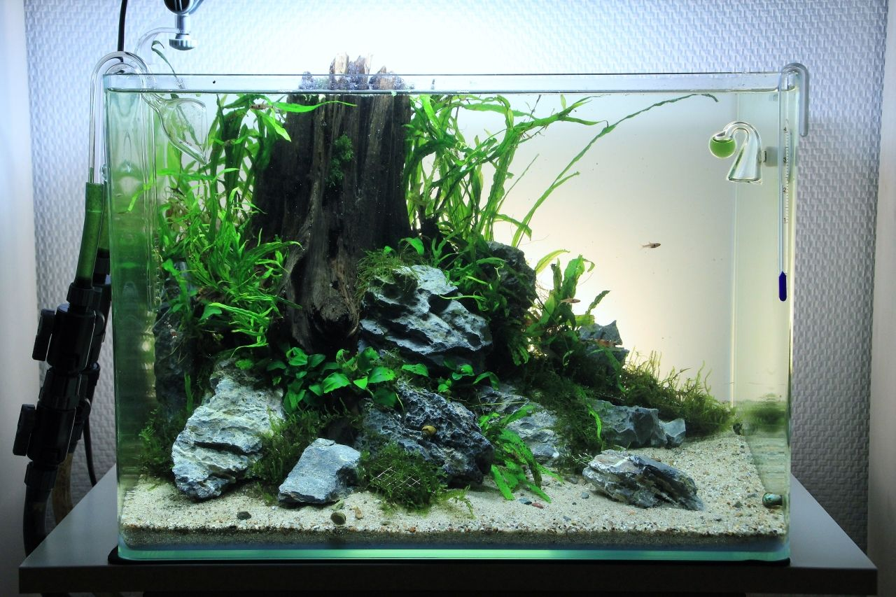 low tech aquarium aquarium pinterest ideen. Black Bedroom Furniture Sets. Home Design Ideas