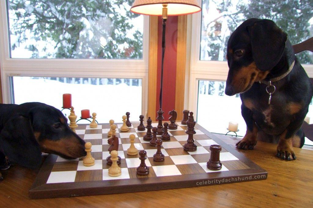 Quality Time With My Bro Wiener Dog Dachshund Weiner Dog