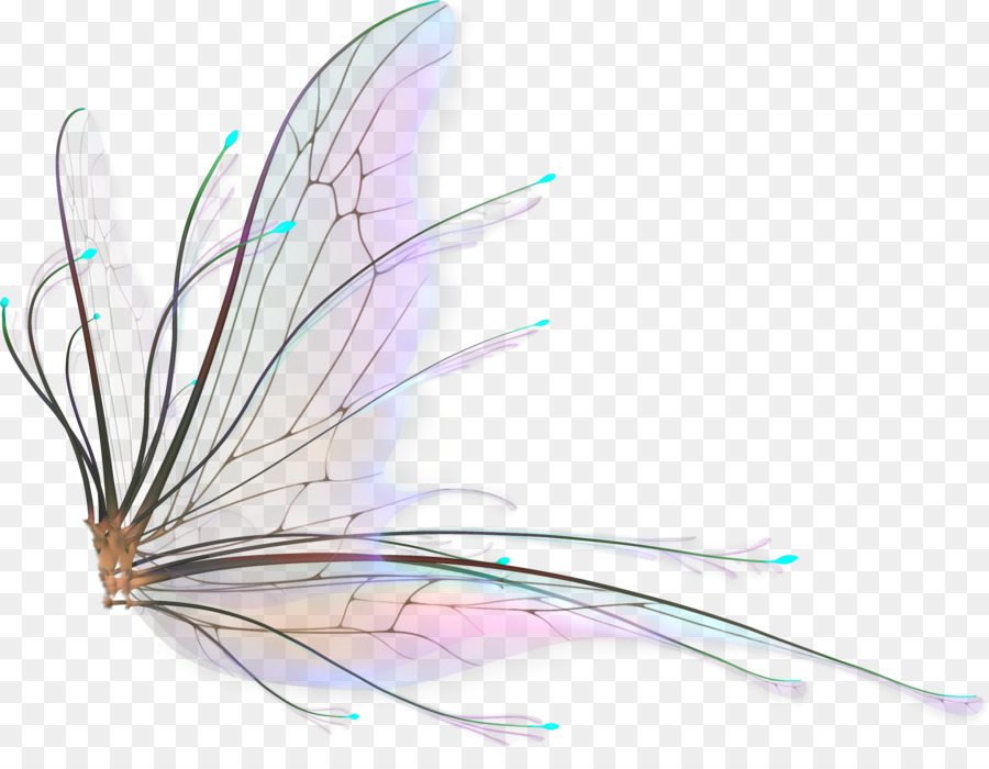 Fairy Wings Background Png Download Fairy Wings Drawing Fairy Wings Wings Drawing
