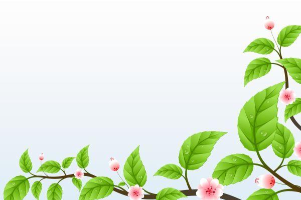 6000x4000 Cozunurluklu Web Siteleriniz Icin 3 Adet Yesil Yapraklar Geri Plan Resmi Yuksek Cozunurluklu Bu Resimler Tamamen Ucretsizdir Yaprak Resimler Resim