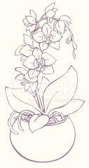 Orchidee Zeichnen Bleistift