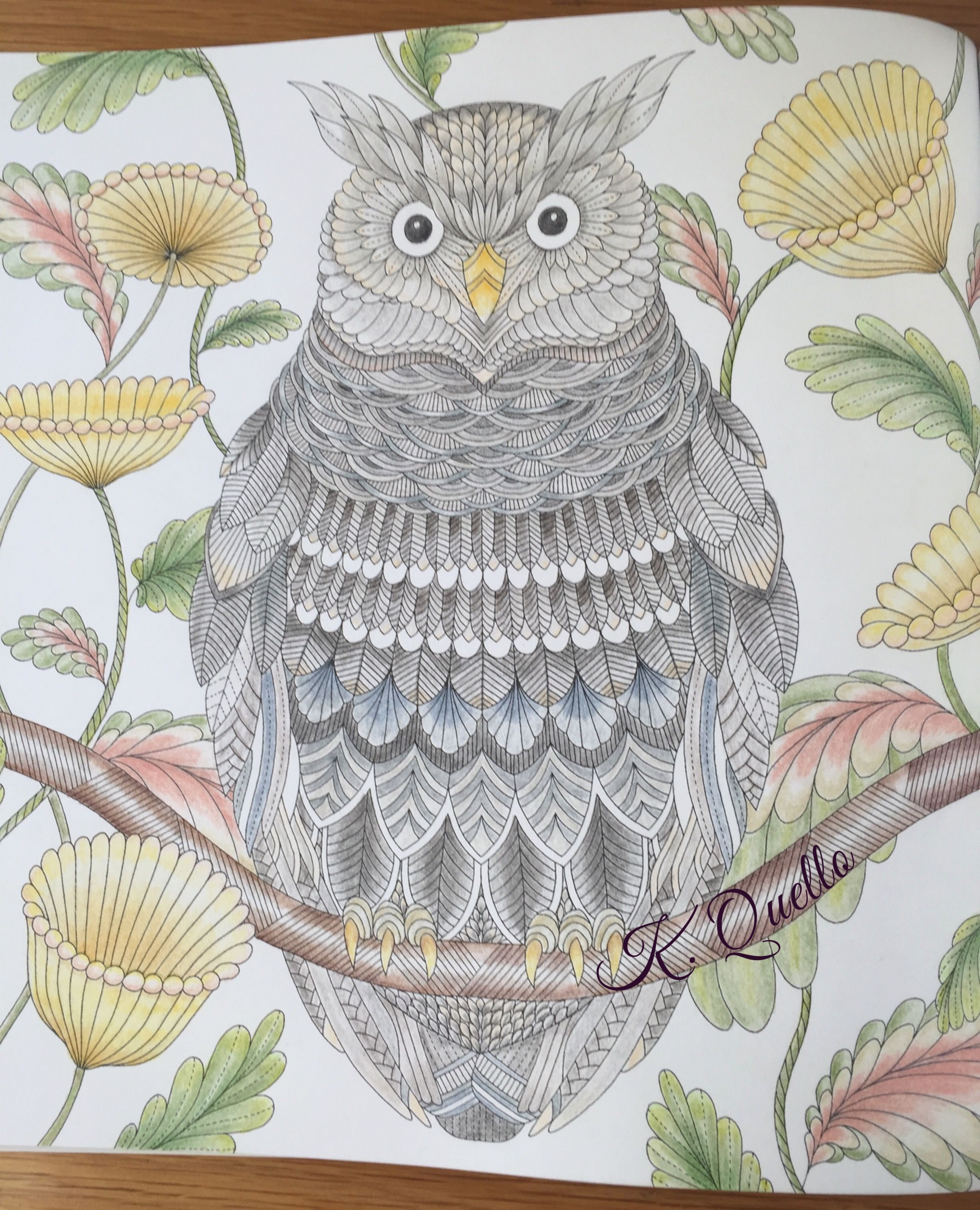 From Millie Marottas Tropical World Coloring Book Milliemarotta