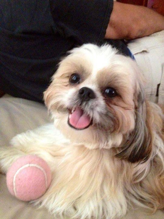 Looks exactly like my Little Joe. I miss my buddy every single day!! Best.Dog.Ever!!